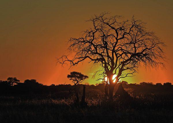 Sunset Moremi