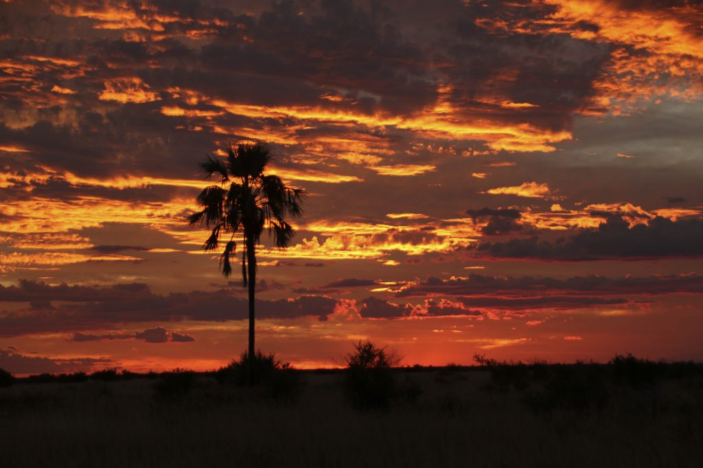 Sunset with a Palm tree, Makgadikgadi
