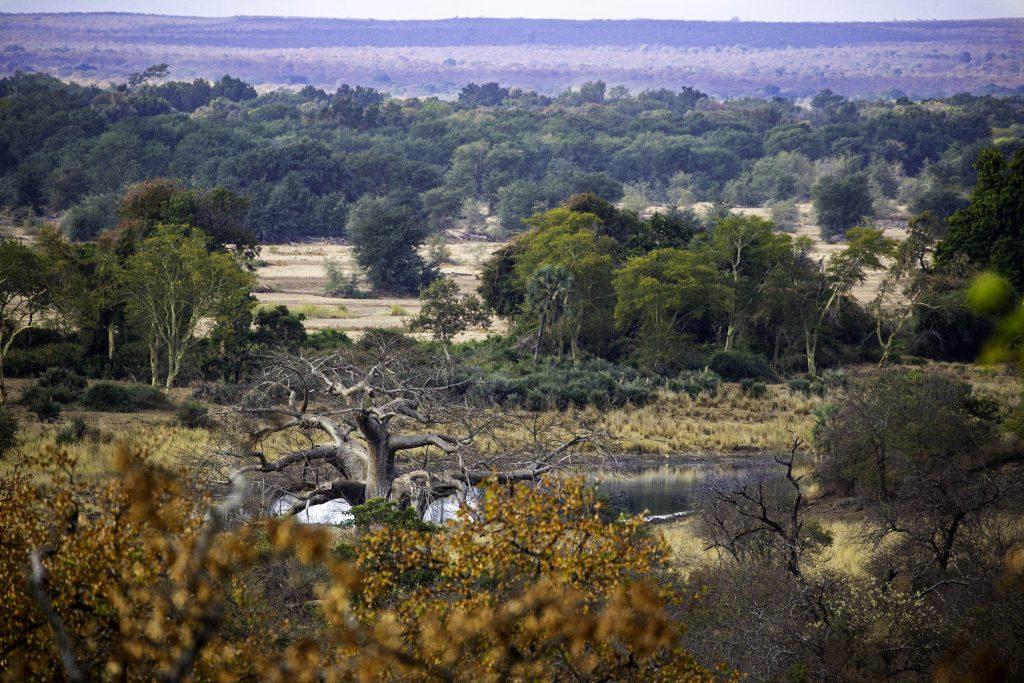 Boabab near a pond