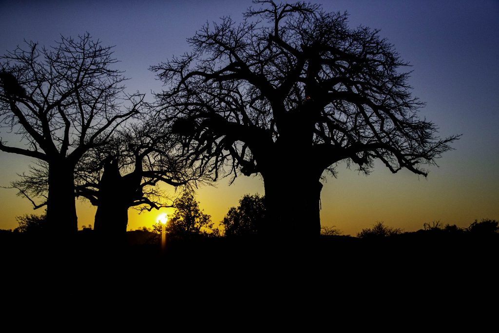 Baobab sunrise Pafuri, Kruger north