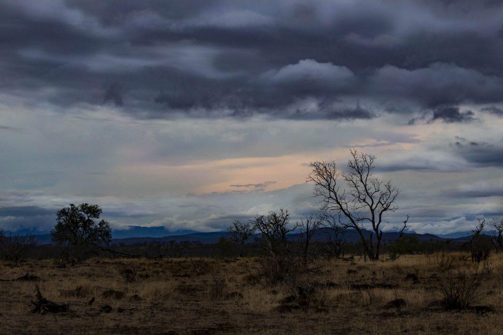 Near Pretoriuskop, Kruger National Park