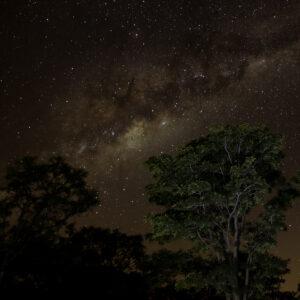 Combretum Park