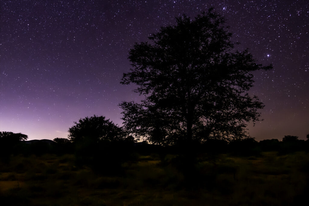 FAir Lawn Starry night