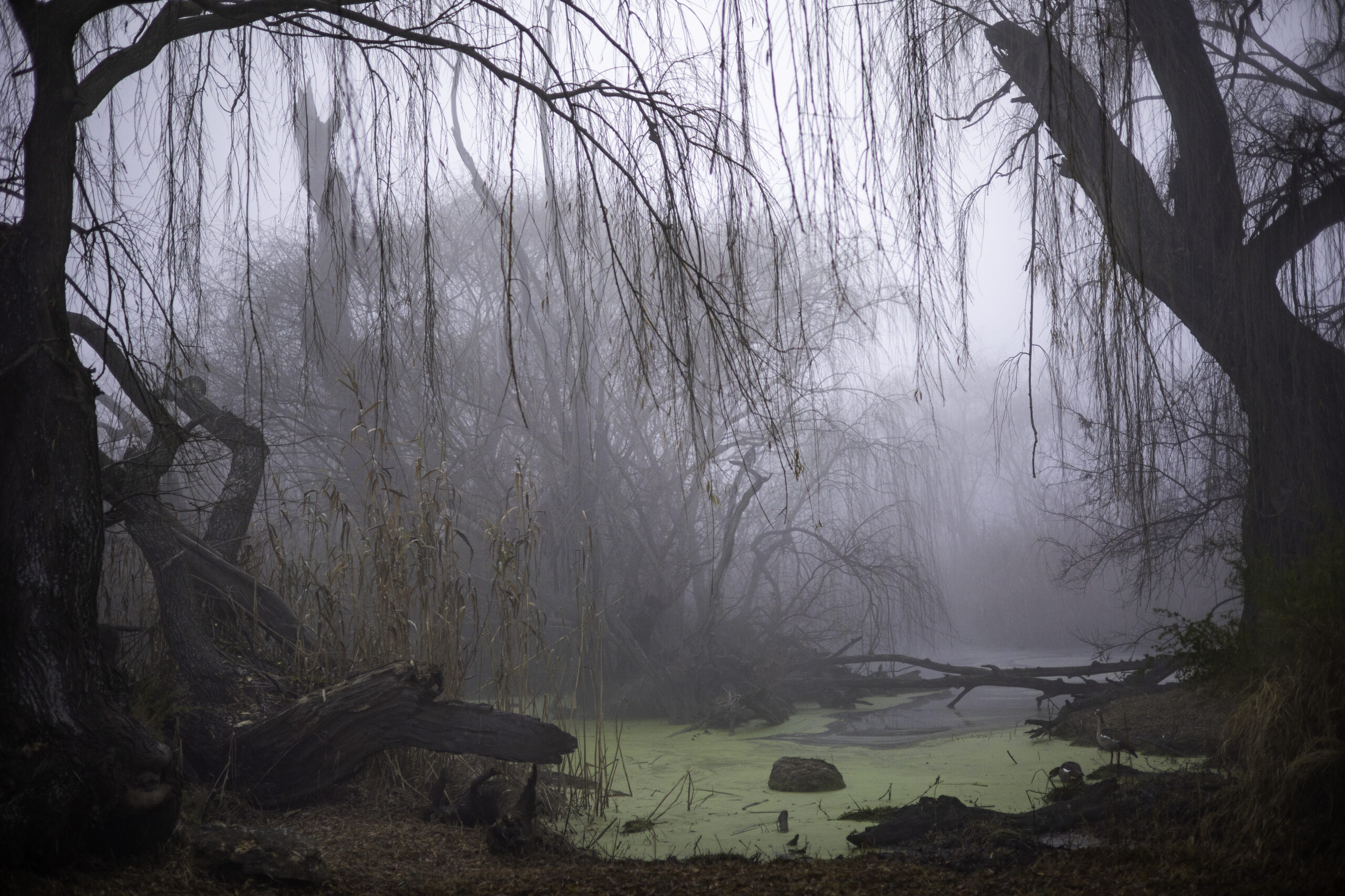 Misty morning at Rietvlei.