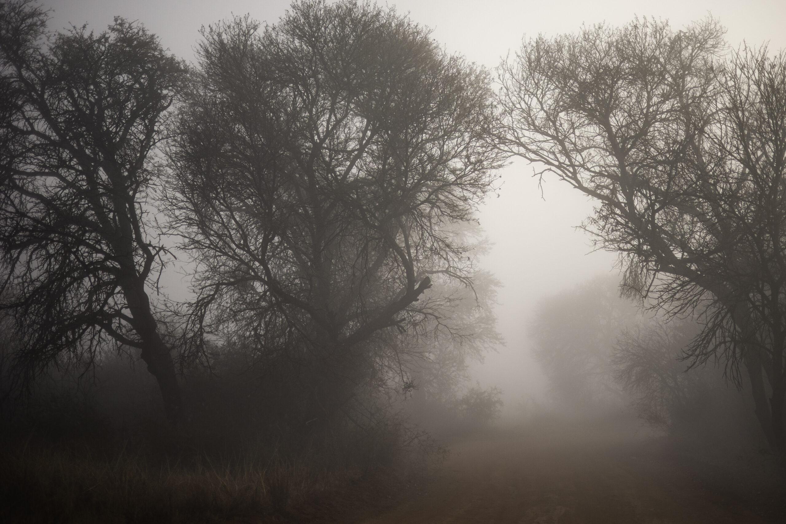 Fog covered Rietvlei