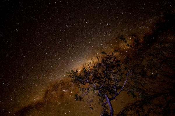 Stars Nyarhi