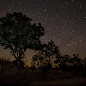 Kruger nights