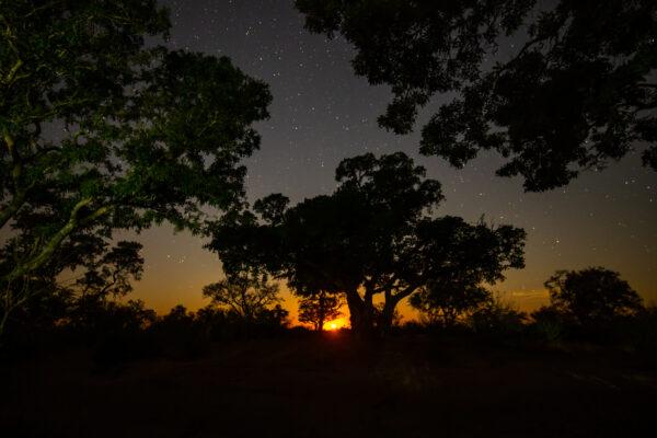 Moon , Ficus,